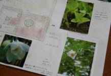 garden21