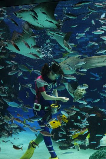 サンシャイン水族館にて