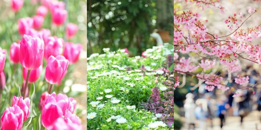 東京下北沢 初心者・女性のための『花と雑貨のカメラ教室』1